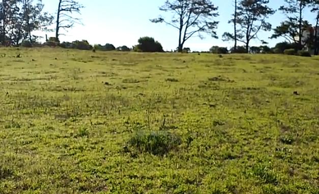 Preocupación ambiental en Miramar